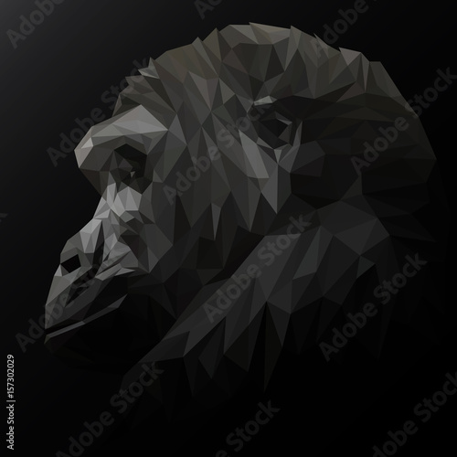 Chimpanzees low poly design. Triangle vector illustration.