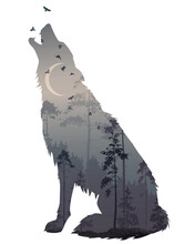 Silhouette Of The Howling Wolf...