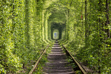 Wonders Of Nature - Tunnel Of Love. Ukraine.