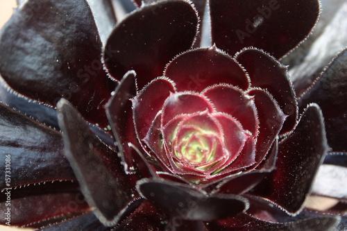 piekny-kwiat