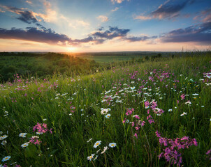 Panel Szklany Podświetlane Łąka Flowers on the mountain field during sunrise. Beautiful natural landscape in the summer time