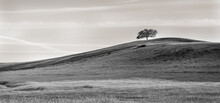 Lone Oak On Hilltop With Interesting Sky In Black And White