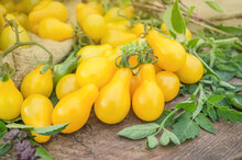 Yellow Pear Tomatoes. Healthy ...