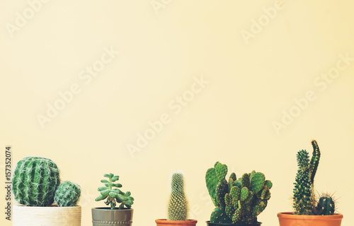 Cactus tops on a muted yellow background