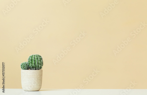 Aluminium Prints Cactus Cactus on a yellow background