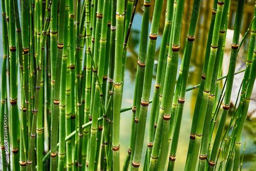 Foto op Plexiglas Groene green bamboo texture