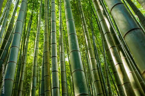 Foto op Plexiglas Bamboe Bamboo Kyoto