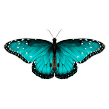 Butterfly Symmetric Top View O...