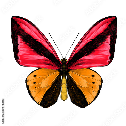Fototapeta butterfly symmetric top view of orange and red colors, sketch vector graphics color picture