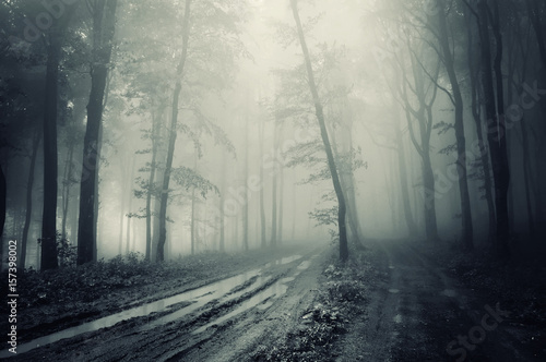 Scary Dark Fantasy Forest With Road And Trees In Fog Buy