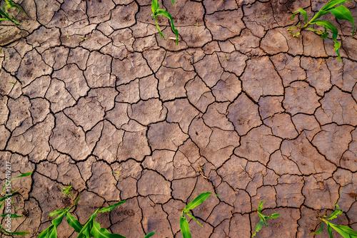 Plakat Suche pola kukurydzy z pęknięć, widok z góry