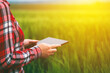 canvas print picture - Female farmer using tablet in wheat crop field