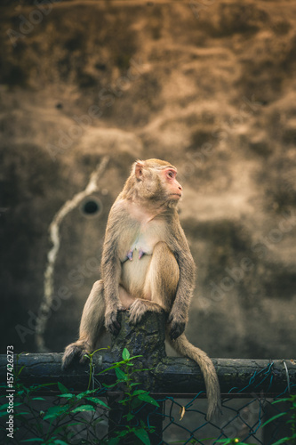 In de dag Macaque perched on a fence