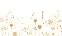 Watercolor Border With Dried Plants Isolated On White. Hand Painted Illustration.