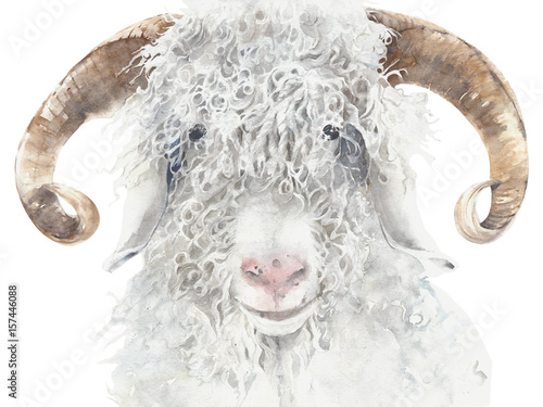 Goat angora breed farm animal wool animal portrait watercolor painting illustrat Wallpaper Mural