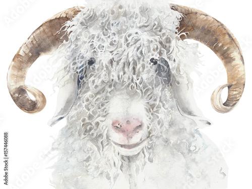 Photo Goat angora breed farm animal wool animal portrait watercolor painting illustrat