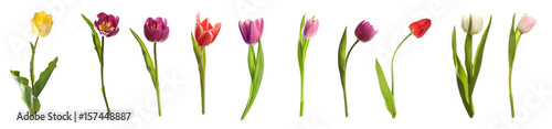 Staande foto Tulp Different kinds of tulips on white background