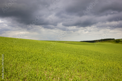 Foto op Canvas Pistache pea field and storm clouds