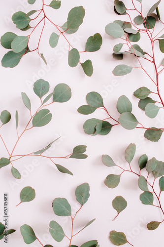 Fototapety, obrazy: Beautiful eucalyptus branches pattern on pale pastel pink background. Flat lay, top view. Lifestyle composition.