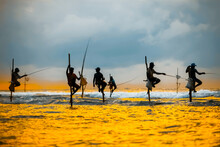 Traditional Fishermen On Sticks At The Sunset In Sri Lanka.