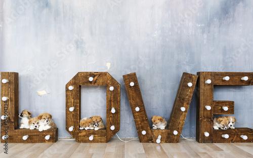 Fotomagnes Grupa śliczni szczeniaki przeciw tłu słowo miłość