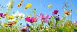 Fototapeta Natura - Blumenwiese - Hintergrund Panorama - Sommerblumen