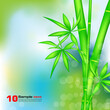 Summer blurry background with bamboo