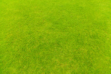 Top View Of Natural Green Grass Texture, Aerial View Of Park