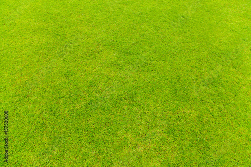 Valokuva  Top view of Natural green grass texture, Aerial view of park