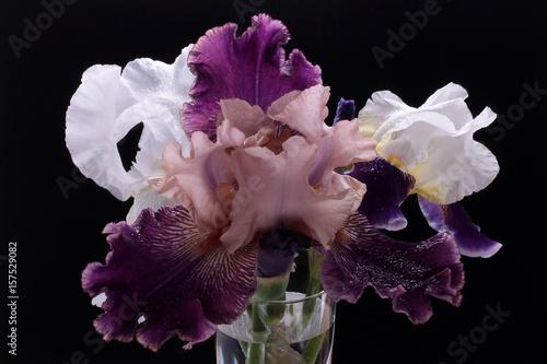 Photo sur Aluminium Iris букет ирисов