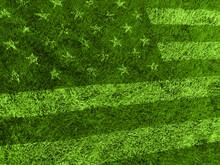 American Flag Grass