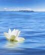 fleur blanche de lotus sur mer d'huile en Thaïlande