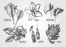 Ink Hand Drawn Set Of Tropical And Exotic Flowers - Protea, Tillandsia, Azalea, Anthurium, Magnolia, Agapetes. Botanical Elements Collection For Design, Vector Illustration.