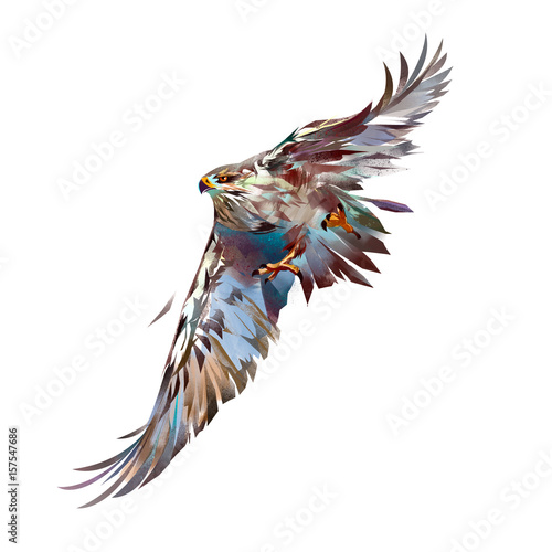 painted bright attacking bird hawk Canvas Print