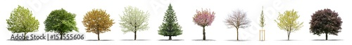 Obraz High definition collection Tree isolated on a white background - fototapety do salonu