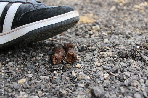 Fotografie, Obraz  marcher dans une crotte de chien : pas de chance