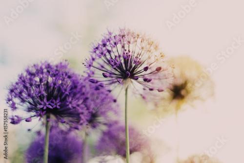 Photo Flower purple sunrise