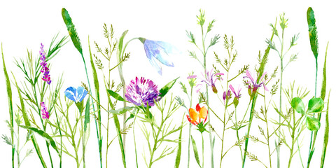 Fototapeta Do sypialni Floral border of a wild flowers and herbs on a white background.Buttercup, clover,bluebell,vetch,timothy grass,lobelia,spike. Watercolor hand drawn illustration.