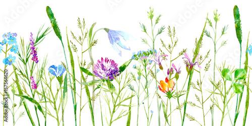 kwiatowy-bezszwowe-granica-dzikich-kwiatow-i-ziol-na-bialym-tle
