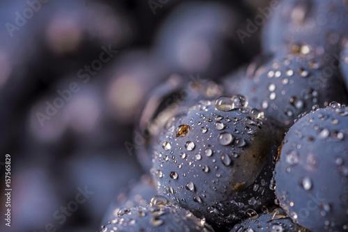 Türaufkleber Makrofotografie grape vines isolated , water drops ,macro shot , black background , ideal grapes bunch , closeup