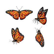 Butterfly Monarch Butterfly, D...