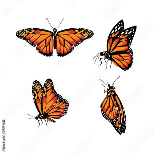Fotografie, Obraz  butterfly Monarch Butterfly, Danaus plexippus
