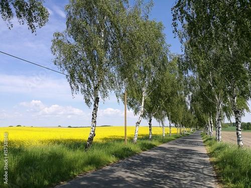 Wąska droga wiejska. - 157581848