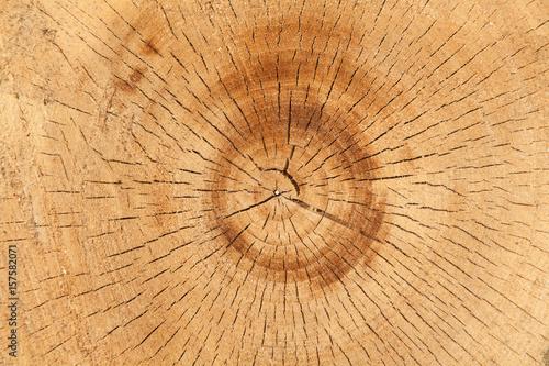 Zdjęcie XXL drewno