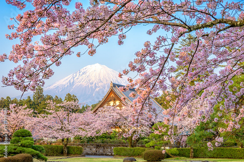 Mt. Fuji, Japan in Spring from Shizuoka Prefecture. Canvas Print