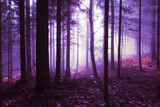 Spooky pink purple colored foggy light in the forest tree landscape. Color tone filter effect used. - 157613225