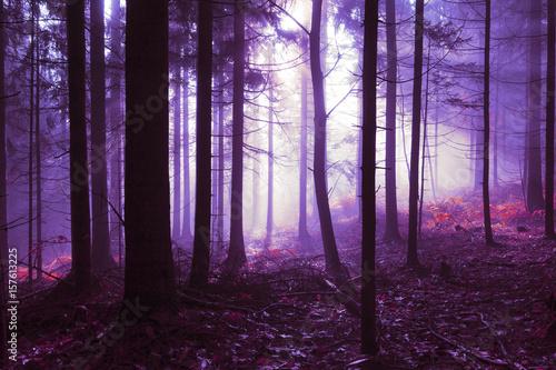 straszne-rozowe-purpury-barwili-mglowego-swiatlo-w-lasowego