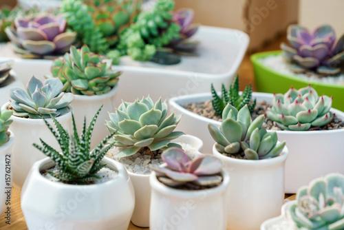 Fototapeta succulent plants obraz