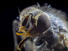 Big Monster Close Up A Fly