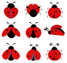 Ladybugs Icon